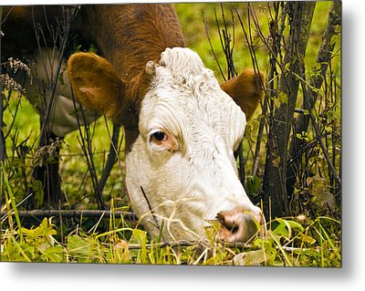 Greener On The Other Side Of The Fence Metal Print by David Simons