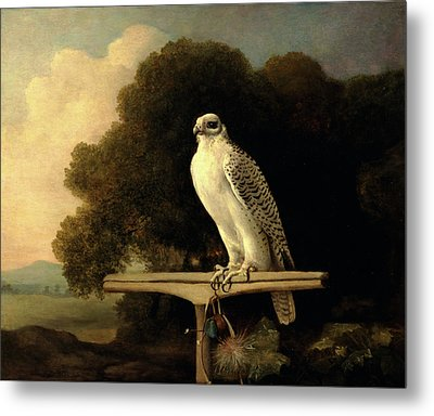 Greenland Falcon Gyr Falcon Signed And Dated Metal Print by Litz Collection