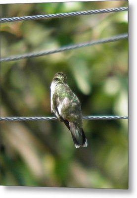 Metal Print featuring the photograph Grooming Hummer by Nick Kirby