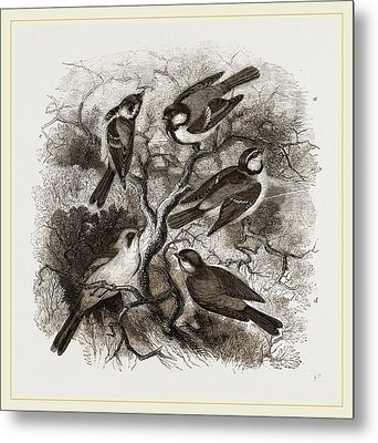 Group Of British Titmice Metal Print by Litz Collection