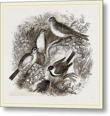 Group Of Buntings Metal Print by Litz Collection