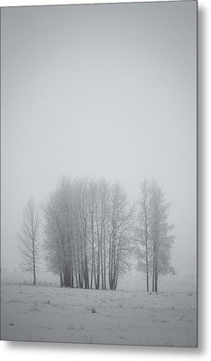 Grove Of Trees Covered In Hoar Frost On Metal Print by Roberta Murray