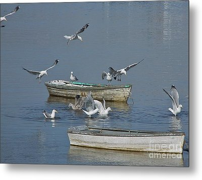 Metal Print featuring the photograph Gulls And Dories by Christopher Mace