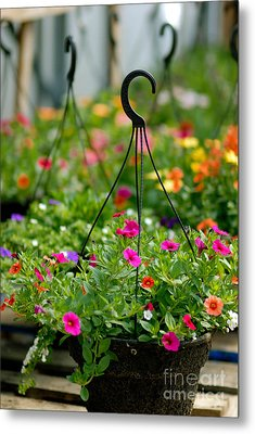 Hanging Flower Baskets Shallow Dof Metal Print by Amy Cicconi