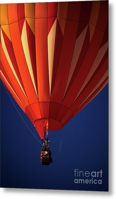 Hanging In There Metal Print by Bob Christopher