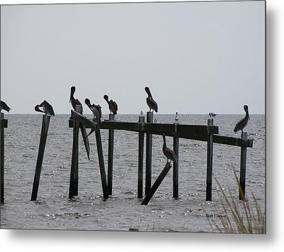 Metal Print featuring the photograph Hanging Out With Friends by Beth Vincent