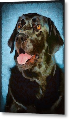 Happy Lab Metal Print by Angel Pachkowski