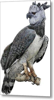 Harpy Eagle, Harpia Harpyja Metal Print