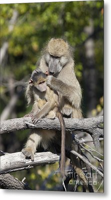 Metal Print featuring the photograph Have You Cleaned Behind Your Ears by Liz Leyden