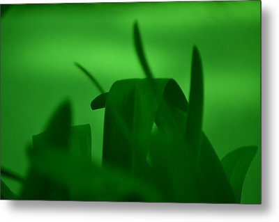 Haze Of Green Metal Print by Kiros Berhane