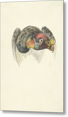 Head Of A King Vulture Or Condor Gypagus Papa Metal Print