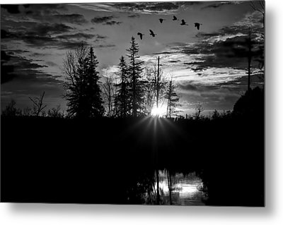 Herons In Flight - Black And White Metal Print by Gary Smith