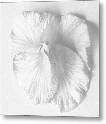 Hibiscus II Metal Print
