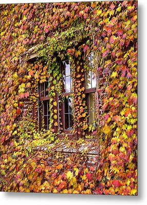 Hidden In The Maylake Ivy Metal Print