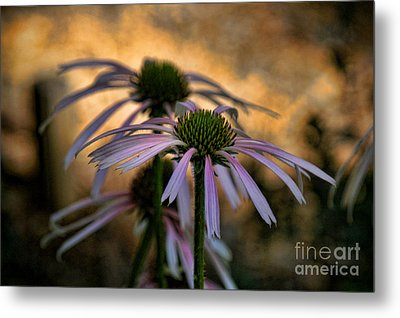 Hiding In The Shadows Metal Print by Peggy Hughes