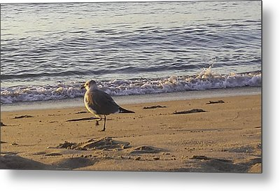 High Stepping In The Sand Metal Print by Debra Bowers