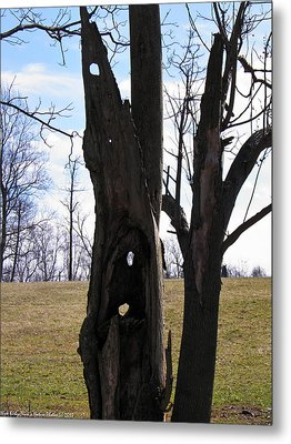 Metal Print featuring the photograph Holey Tree Trunk by Nick Kirby
