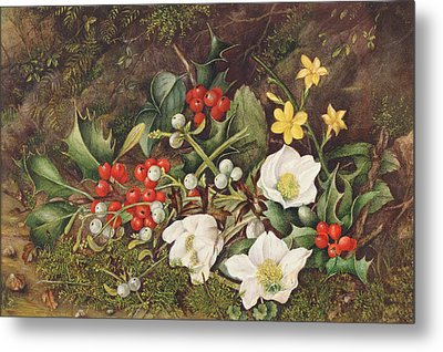 Holly And Christmas Roses Metal Print by Jane Taylor