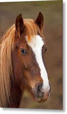 Horse Stare Metal Print by Paul Scoullar