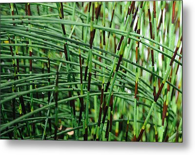 Metal Print featuring the photograph Horse Tail Zen Garden by Haleh Mahbod