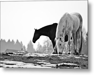 Horses Grazing Metal Print by Sonny Marcyan