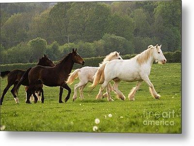 Horses On The Meadow Metal Print by Angel  Tarantella