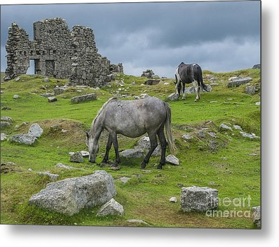 Horses On The Moors Of Dartmoor Metal Print