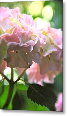 Hydrangea Metal Print by Tracy Male