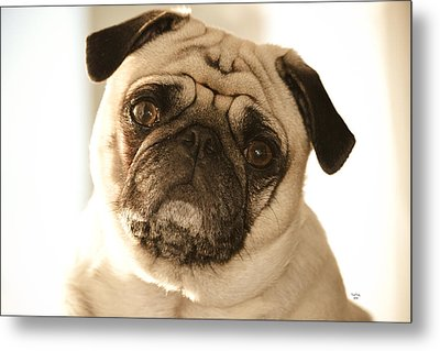 I Can Be Your Lovebug Metal Print by Trish Tritz