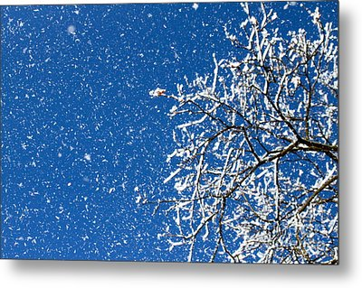 Ice In The Air Metal Print by Jay Nodianos