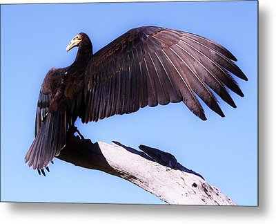 I'm A Pretty Bird Metal Print by Paulette Thomas