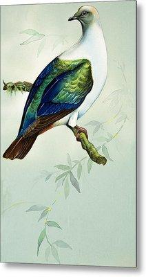 Imperial Fruit Pigeon Metal Print by Bert Illoss