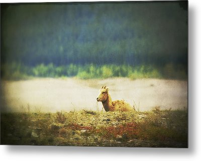Impressionistic Style Of A Bighorn Metal Print by Roberta Murray