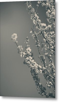 In A Beautiful World Metal Print by Laurie Search