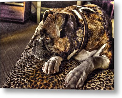 In Repose Metal Print by William Fields