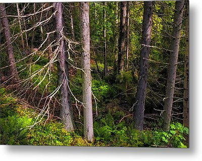 In The Depth Of Northern Forest Metal Print by Jenny Rainbow