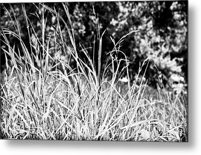 In The Grass Metal Print by Andrew Raby