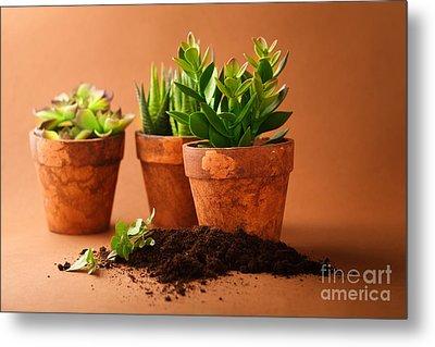 Indoor Plant Metal Print by Boon Mee