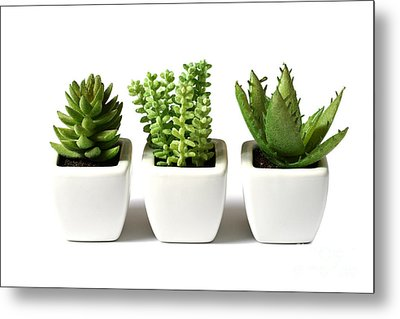 Indoor Plants Metal Print by Boon Mee