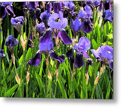 Iris Tectorum Metal Print