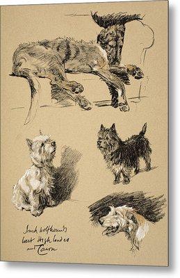 Irish Wolfhound, West Highlander Metal Print by Cecil Charles Windsor Aldin