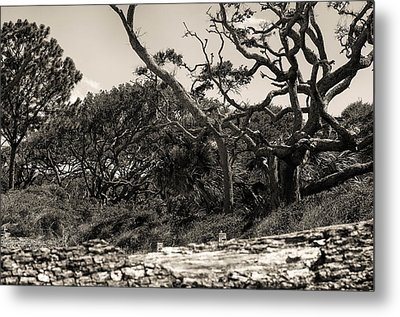 Island Trees Metal Print by J Riley Johnson