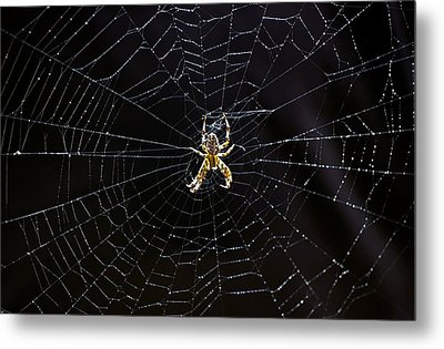 Itsy Bitsy Spider My Ass 2 Metal Print by Steve Harrington