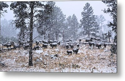January Snow Metal Print