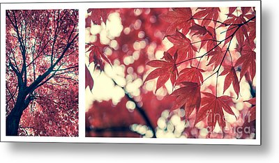 Japanese Maple Collage Metal Print by Hannes Cmarits