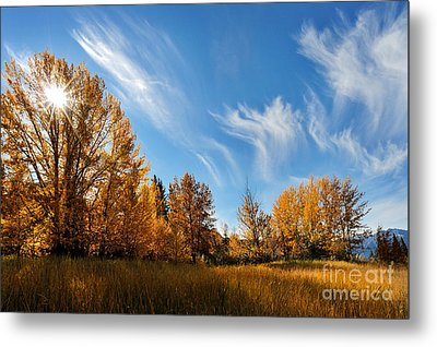Jasper - Autumn Sky Chief Metal Print by Terry Elniski