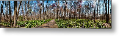 Metal Print featuring the photograph Jersey Swamp  by Robert Culver