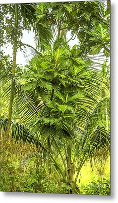 Jungle And Rice Field Metal Print by Regina Koch