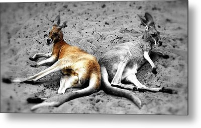 Kangaroo Heart Metal Print by Andrew Connolly