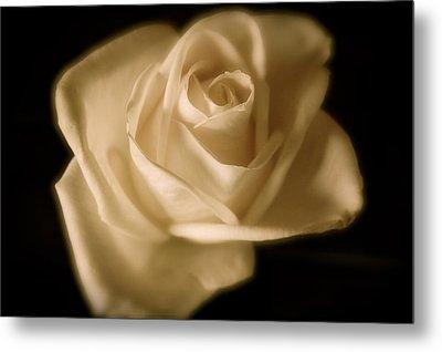 Katie's White Rose Metal Print by Teresa Tilley